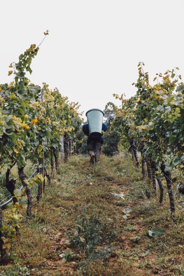 Rieden beschreiben besonders kleine Parzellen mit Mikroterroir - Wein Steiermark