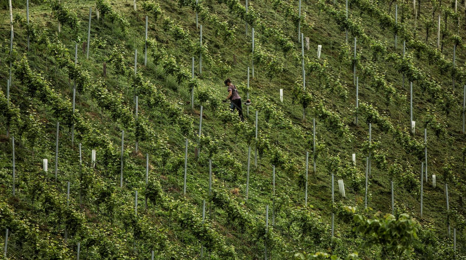 Weinhänge in der Weinregion Südsteiermark - Wein Steiermark
