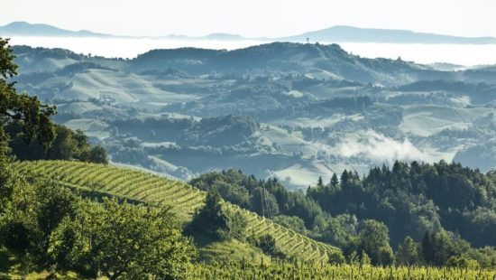 Klima in der Weinregion Steiermark - Herkunft des Morillions