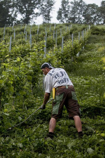 Gespür für das Terroir der Weinregion Steiermark