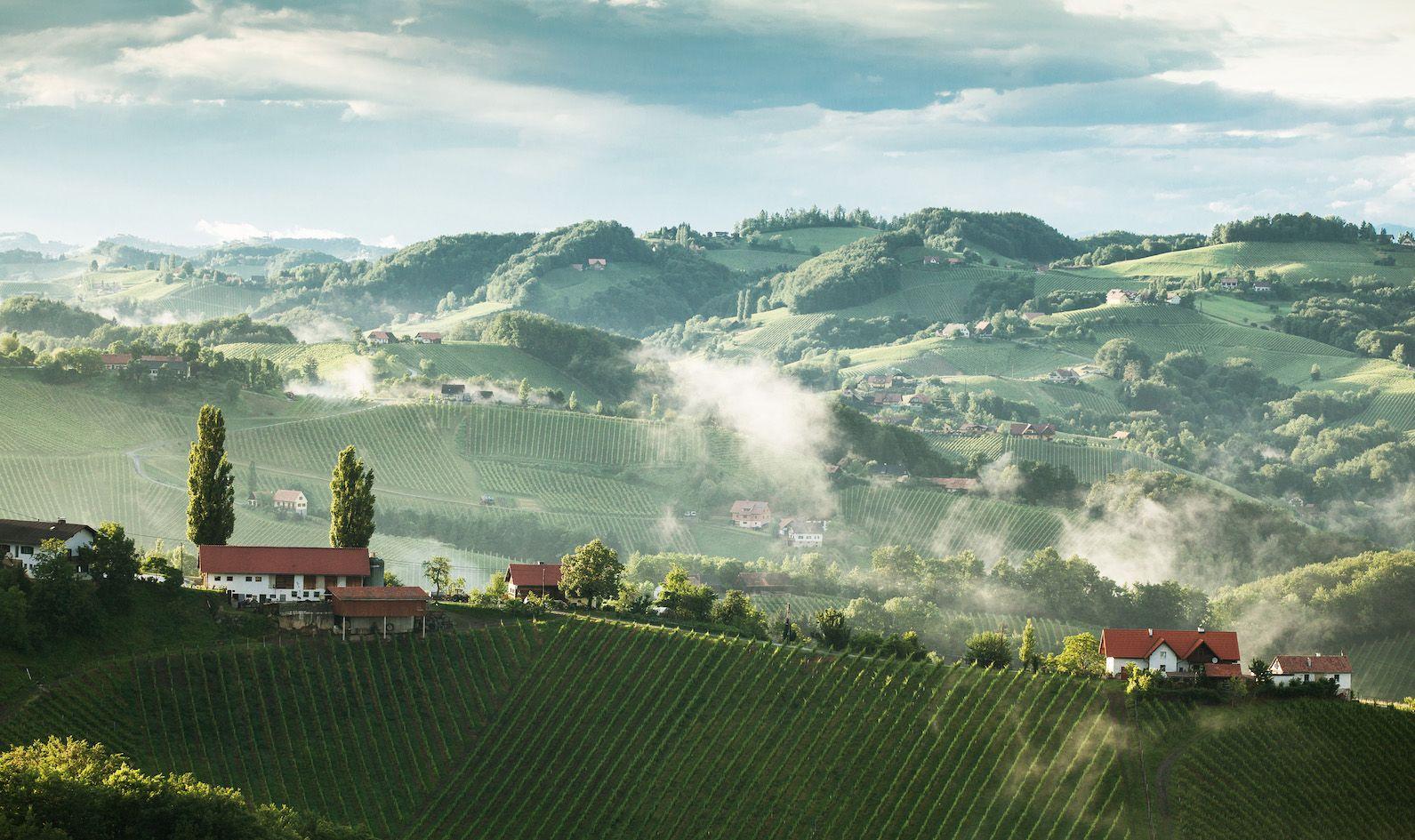 Riede in der Weinregion Steiermark