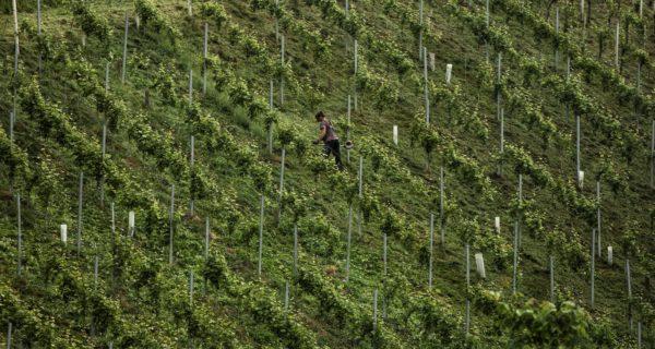 südsteirische Weinberge - Wein Steiermark