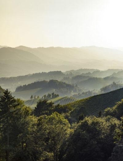 Weinberge der Weinregion Südwest Steiermark