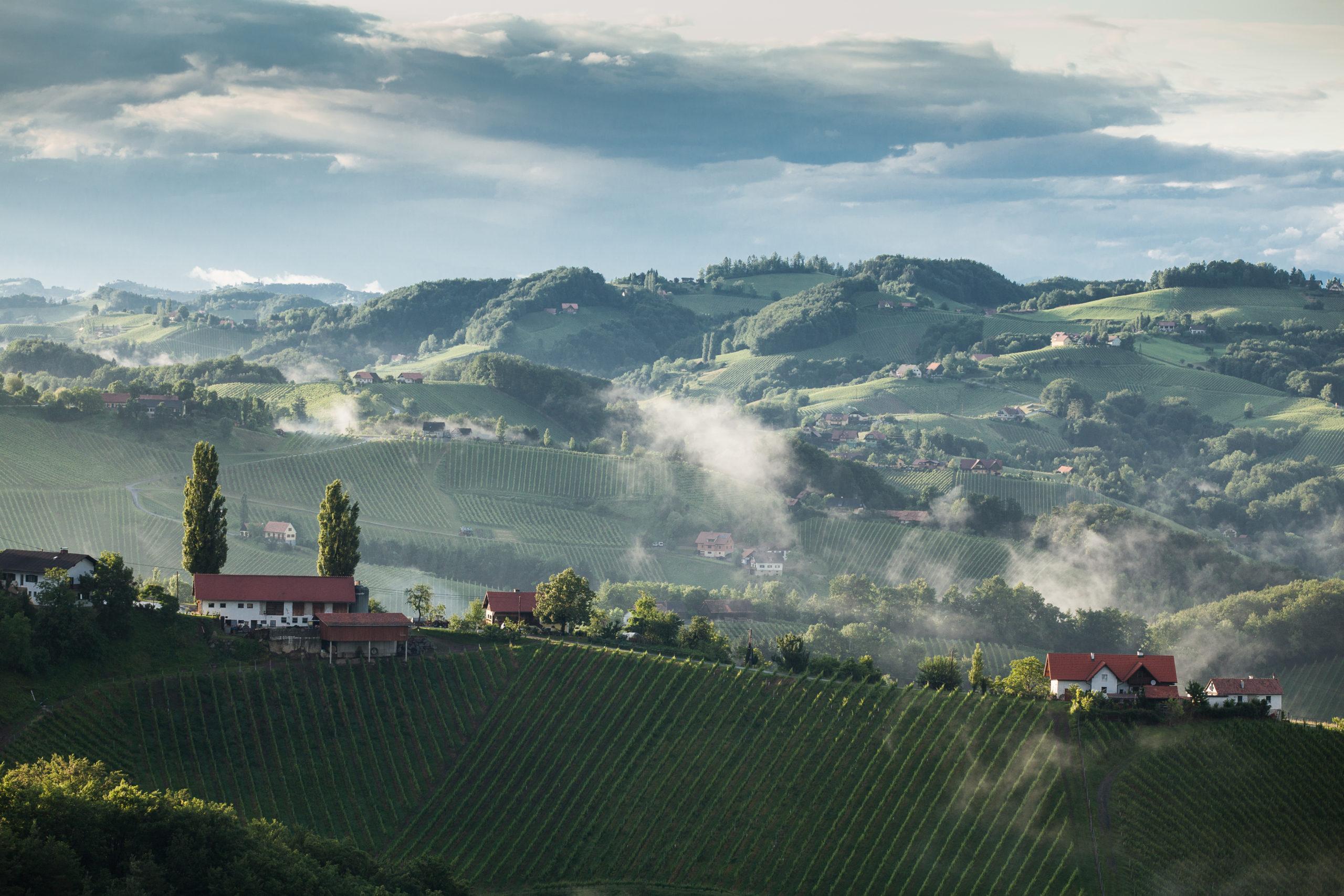 Die Südsteiermark ist das größte Weinbaugebiet der Steiermark.
