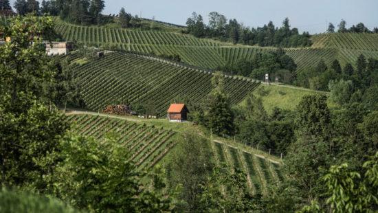 Riede - Weingärten in Steiermark - steirischer Wein