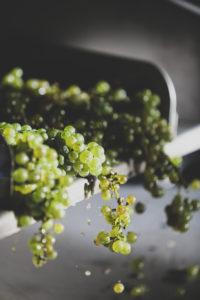 Weinreben - Jahrgang 2020 - Wein Steiermark