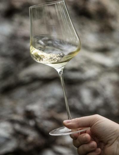 Sauvignon Blanc als beliebtester Weißwein der Weinregion Südsteiermark - Wein Steiermark