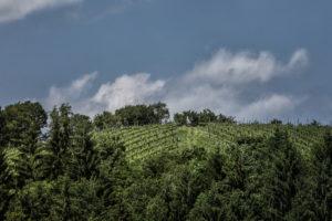 Ortsweingebiet Tischen im Vulkanland in der Südsteiermark - Wein Steiermark