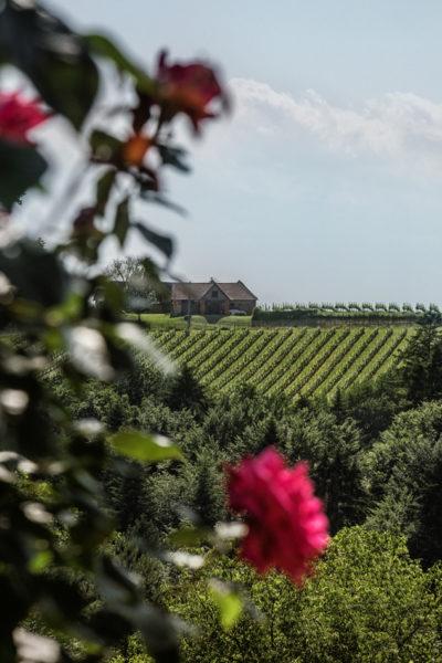 Ortsweingebiet Oststeiermark - Weinberge im DAC Anbaugebiet Vulkanland