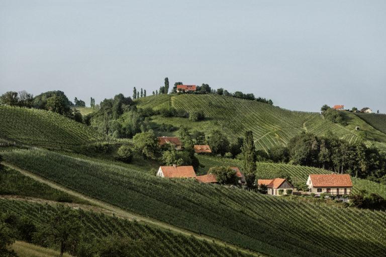 Weinberge im Steirischen Vulkanland - Weine aus dem Vulkanland kaufen - Wein Steiermark