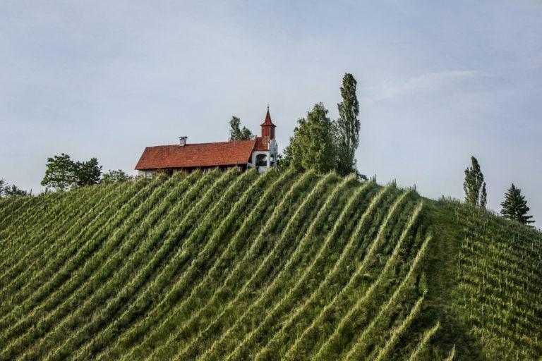 Weinberge St Anna in der Südsteiermark - südsteirische Weine online kaufen - Wein Steiermark