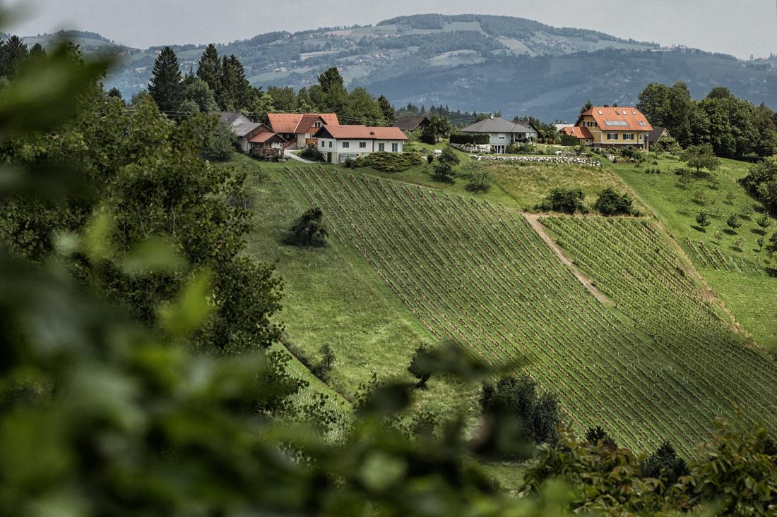 steirische Weinhänge - Ortsweine - Wein Steiermark