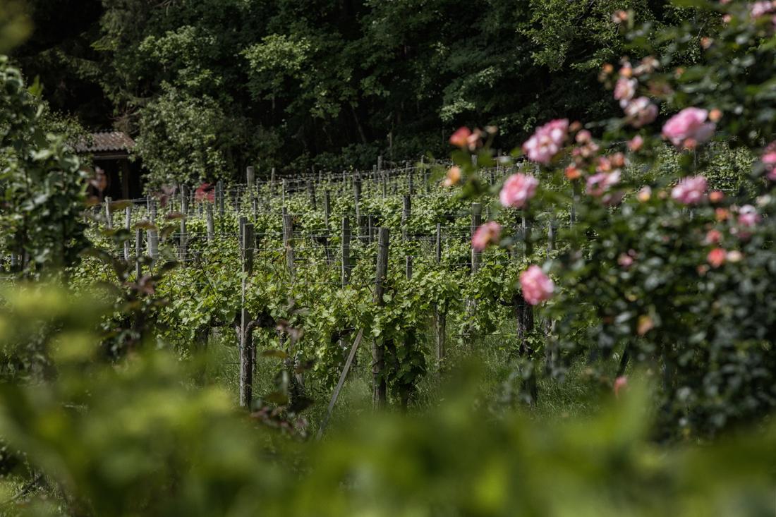Weingärten in der Weinregion Steiermark