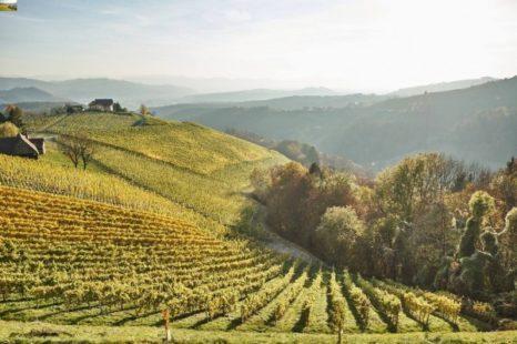 Weinhänge Ried Wohlmuth Steinriegl Sausal - DAC Herkunftsgebiet Südsteiermark