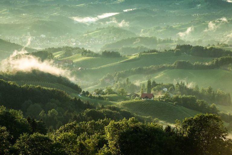 Wein Region Steiermark - Wein Steiermark