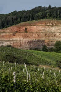 Weinreben - Vinaria Verkostung - Wein Steiermark