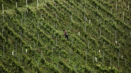 Steirische Weinhänge - Prädikat Wein Steiermark - Steirischer Wein