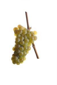 Weintrauben Riesling - Weinsorten - Wein Steiermark