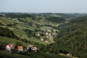 Weinanbaugebiet Sauvignon Blanc Steiermark überschreitet die 5.000 Hektar Marke - Rebsorte Sauvignon Blanc an der Spitze News Wein Steiermark